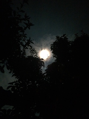 """Harvest Moon\"" Neil Young_c0077330_18412314.jpg"