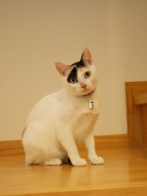 猫のお留守番 サクラちゃんユリちゃん編。_a0143140_23402669.jpg