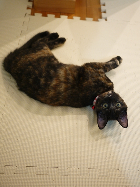 猫のお留守番 サクラちゃんユリちゃん編。_a0143140_2341043.jpg
