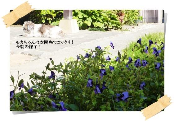 f0224350_112218.jpg