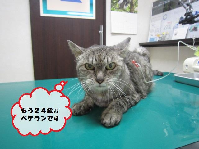 【24歳のネコ】_b0059154_16205582.jpg