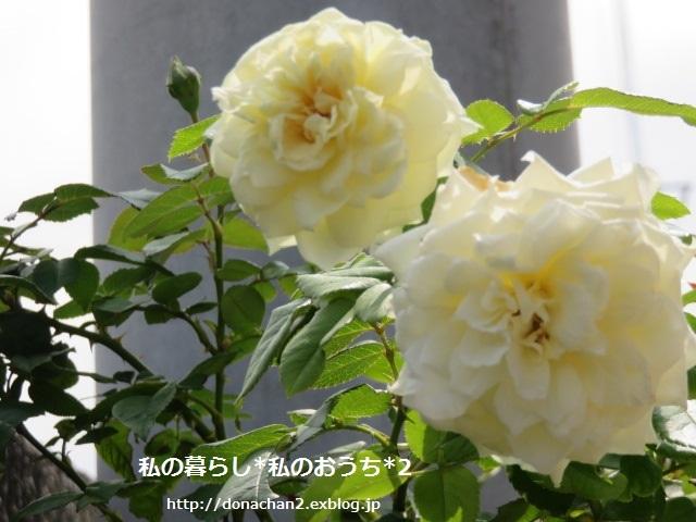 e0354456_08034980.jpg