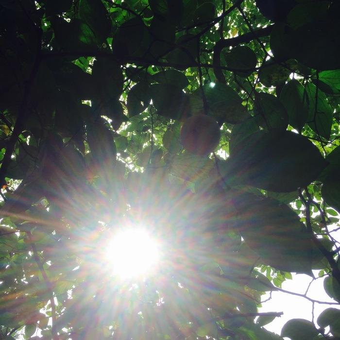 武相荘  陶芸教室  〔其の1〕太陽と満月  編_d0105967_19161843.jpeg
