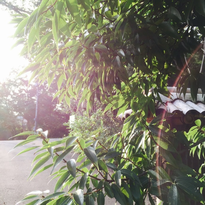 武相荘  陶芸教室  〔其の1〕太陽と満月  編_d0105967_20064315.jpeg