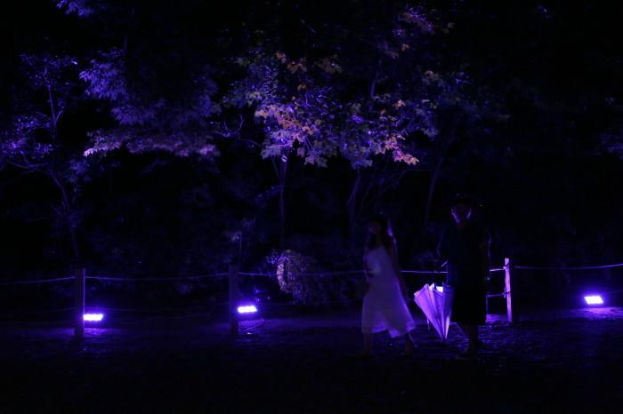 下鴨神社 糺の森の光の祭_f0021869_23454568.jpg