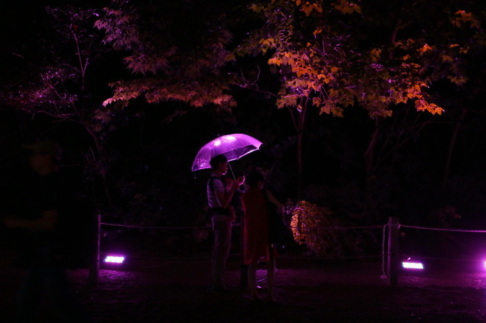 下鴨神社 糺の森の光の祭_f0021869_23472124.jpg