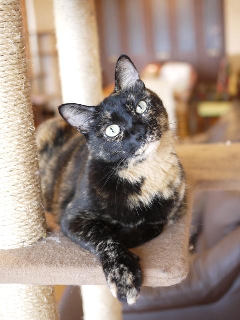 猫のお留守番 ワサビちゃん天ちゃん麦くん茶くん編。_a0143140_22254237.jpg