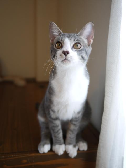 猫のお留守番 ワサビちゃん天ちゃん麦くん茶くん編。_a0143140_22263615.jpg