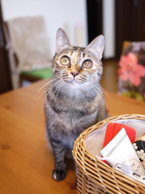 猫のお留守番 ワサビちゃん天ちゃん麦くん茶くん編。_a0143140_2226767.jpg