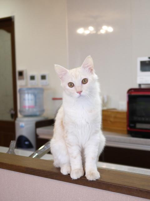 猫のお留守番 ワサビちゃん天ちゃん麦くん茶くん編。_a0143140_22271542.jpg