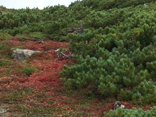 赤岳の一番紅葉~大雪山_e0326953_06462660.jpg
