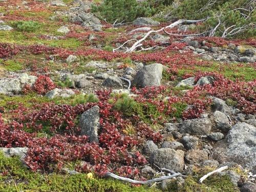 赤岳の一番紅葉~大雪山_e0326953_06482965.jpg