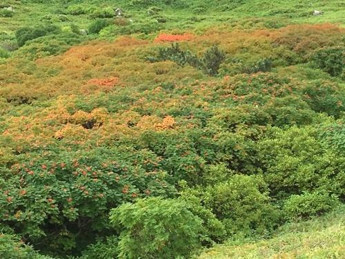 赤岳の一番紅葉~大雪山_e0326953_06521543.jpg