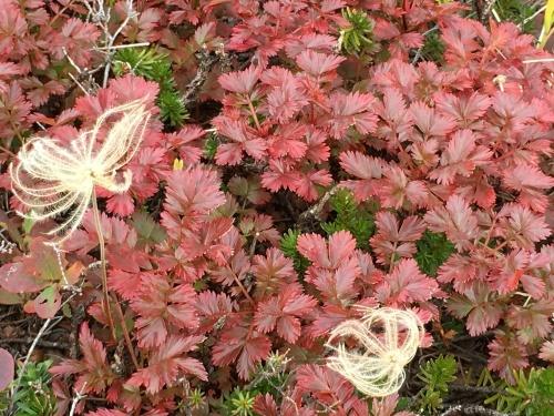 赤岳の一番紅葉~大雪山_e0326953_07011098.jpg