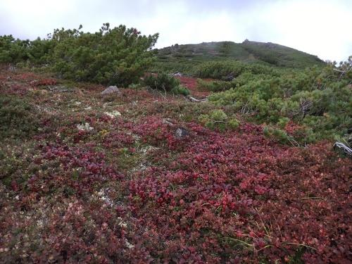 赤岳の一番紅葉~大雪山_e0326953_07022215.jpg