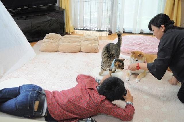 猫とともだちカレンダー_a0126590_23010139.jpg