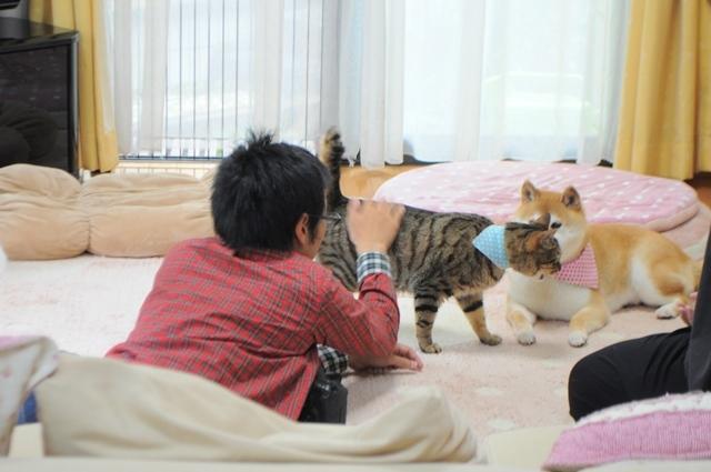 猫とともだちカレンダー_a0126590_23013035.jpg