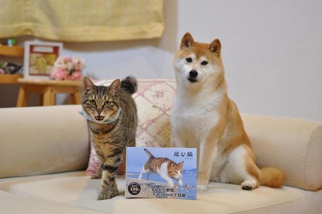 猫とともだちカレンダー_a0126590_23025248.jpg