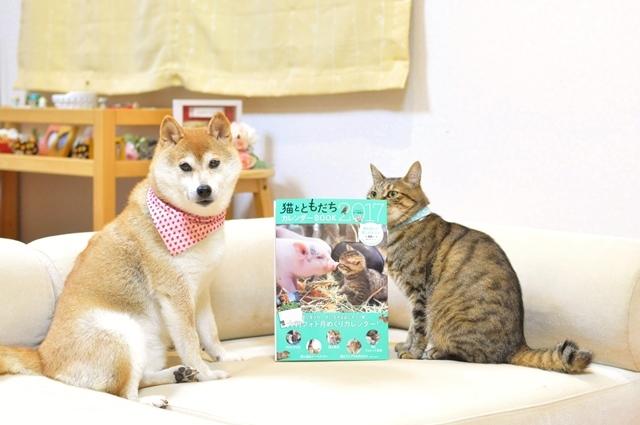 猫とともだちカレンダー_a0126590_23033834.jpg