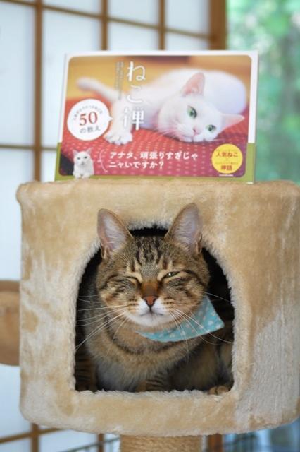 猫とともだちカレンダー_a0126590_23044810.jpg