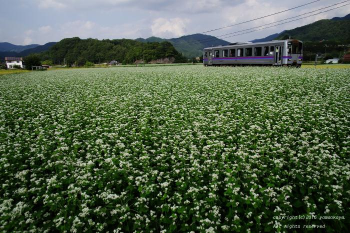 蕎麦の畑を駆けてゆく_d0309612_22264111.jpg