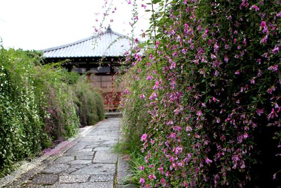 萩の寺 常林寺_e0048413_17121840.jpg