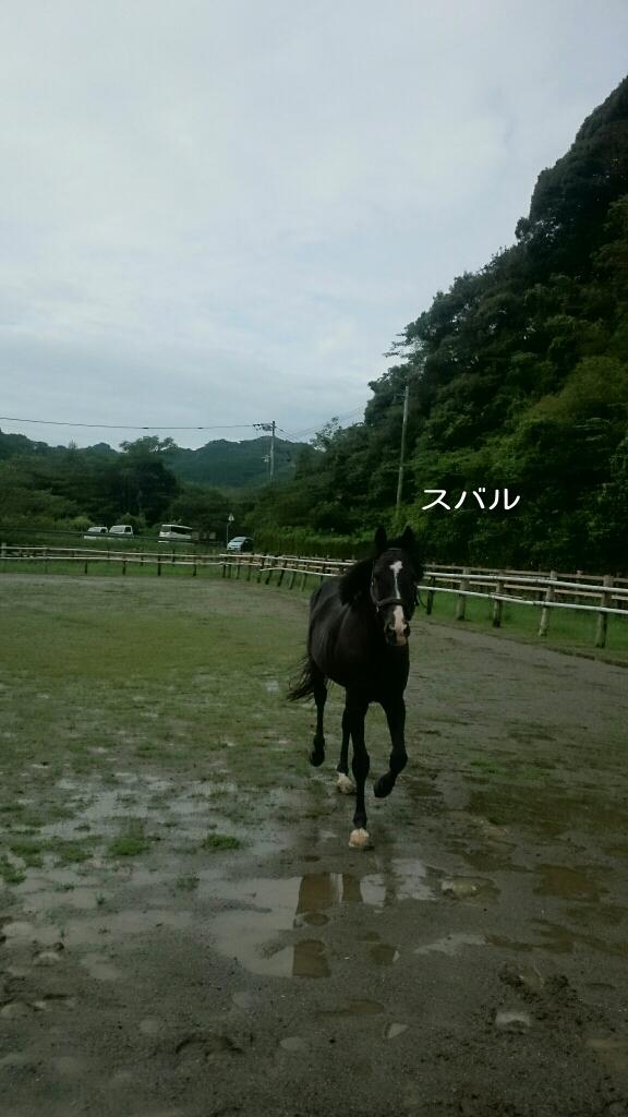 雨ばっかり!!_b0187620_13023035.jpg