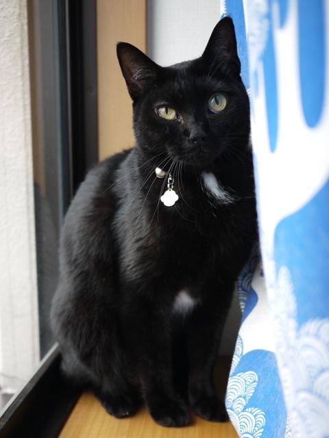 猫のお留守番 にこたすちゃんくろまめくん編。_a0143140_22414580.jpg