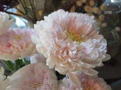オークリーフ(菊の花)_f0049672_12544233.jpg