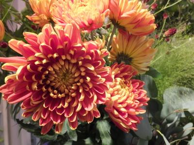 オークリーフ(菊の花)_f0049672_12545787.jpg