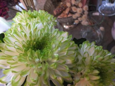 オークリーフ(菊の花)_f0049672_125591.jpg