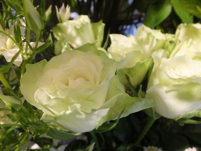 オークリーフ(菊の花)_f0049672_12561883.jpg