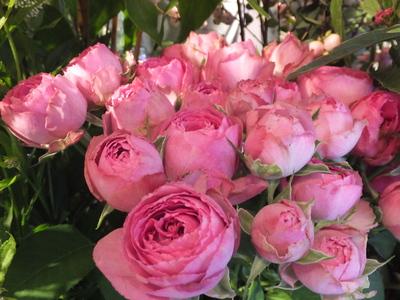 オークリーフ(菊の花)_f0049672_12572343.jpg
