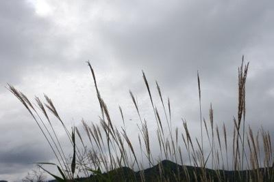 秋色の畑_d0133485_15375791.jpg