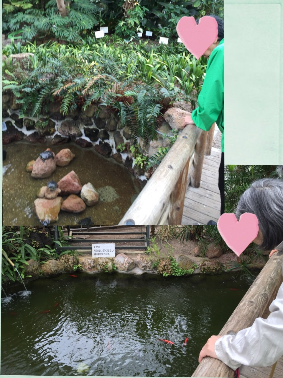 熱帯植物園へ_c0205393_20332250.jpg