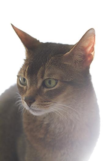 [猫的]光と猫_e0090124_20583951.jpg