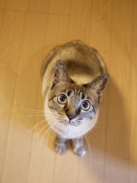 猫のお留守番 カン太くんルノーちゃん編。_a0143140_20432489.jpg