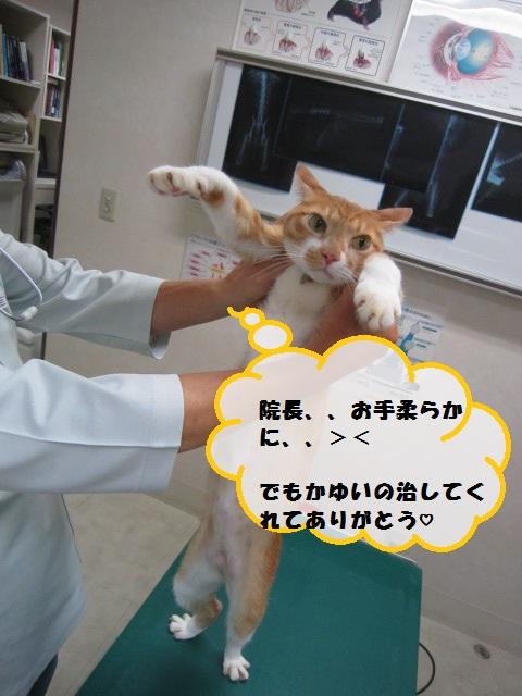 【アトピー性皮膚炎のネコ】_b0059154_18494347.jpg