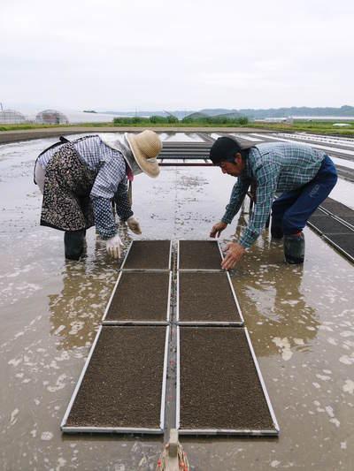 七城米 長尾農園 令和3年も美しすぎる田んぼで稲穂が頭を垂れ始めました!稲刈りは10月中旬です! _a0254656_18275424.jpg