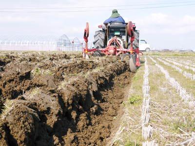 七城米 長尾農園 令和3年も美しすぎる田んぼで稲穂が頭を垂れ始めました!稲刈りは10月中旬です! _a0254656_18592365.jpg