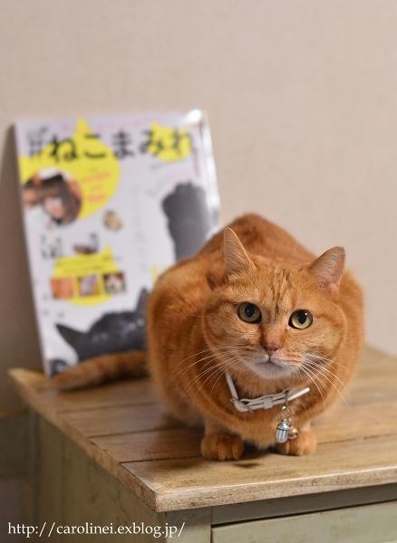 「#ねこまみれ」掲載のお知らせ  Cat Magazine #Nekomamire Debut_d0025294_19115544.jpg