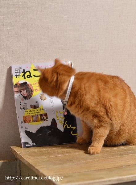 「#ねこまみれ」掲載のお知らせ  Cat Magazine #Nekomamire Debut_d0025294_19123954.jpg