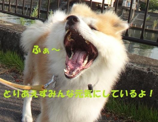 f0121712_17160423.jpg