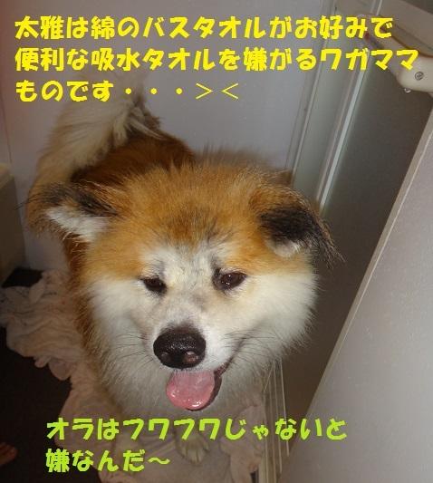 f0121712_17162719.jpg