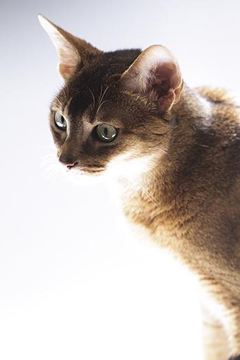 [猫的]光と猫_e0090124_23280055.jpg
