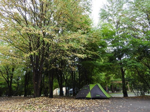 雨の日におすすめ。ルオムの森_b0174425_14223101.jpg
