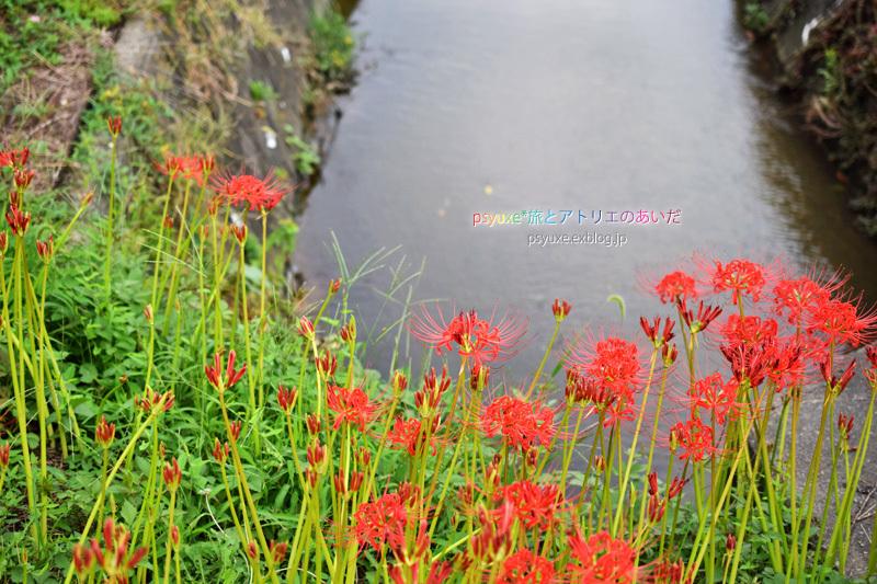 ごんの秋祭り*新見南吉記念館と彼岸花_e0131432_22111114.jpg