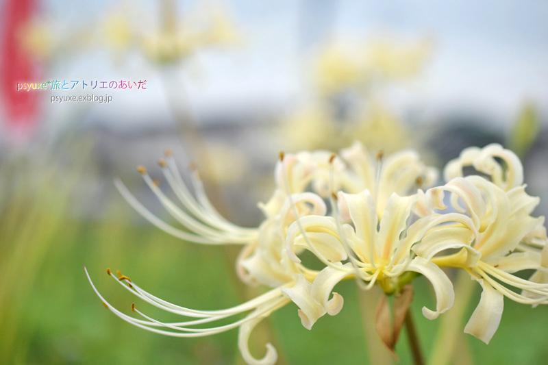 ごんの秋祭り*新見南吉記念館と彼岸花_e0131432_22111768.jpg