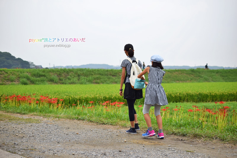 ごんの秋祭り*新見南吉記念館と彼岸花_e0131432_22114296.jpg