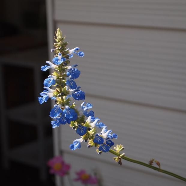 お花の寿命_a0292194_18531735.jpg
